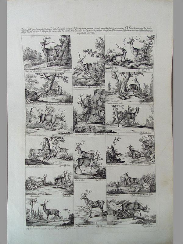 «Породы оленей», изсерии «Звери дляКоролевской охоты». Бумага, гравюра намеди, 35×50см. Нюрнберг, около 1750года.