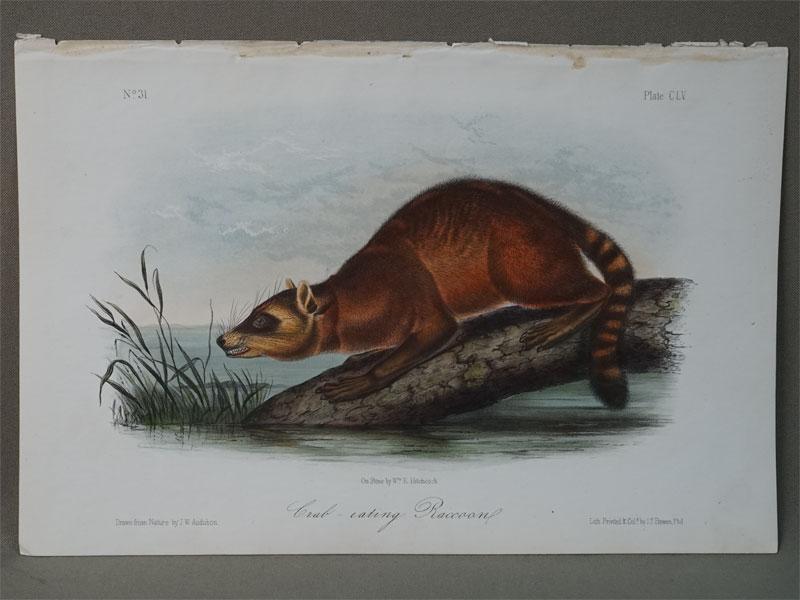 Енот — Ракоед / The Crab-eating raccoon. Draw from by J.W. Audubon. Lith. By J.T. Bowen, Phil. (Америка,  1850). Цветная литография. 20 × 25 см.