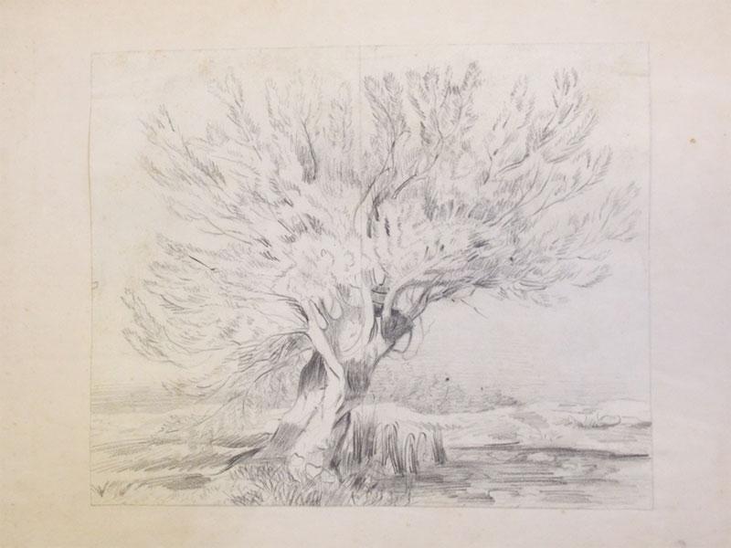 Гротус, София. Дерево у пруда. Бумага, уголь. Ок. 1860. 22 × 27 см.