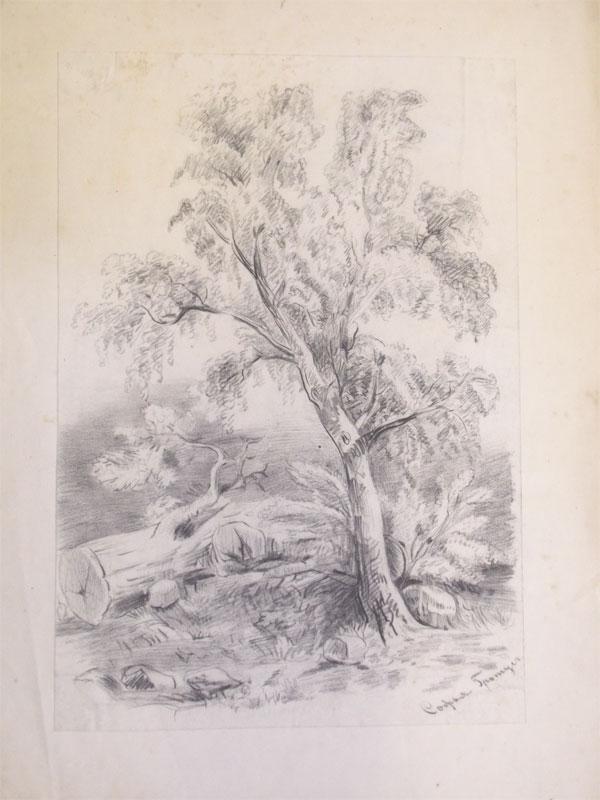 Гротус, София. Пейзаж с деревьями, бумага, уголь, около 1860 года, 22 × 27 см
